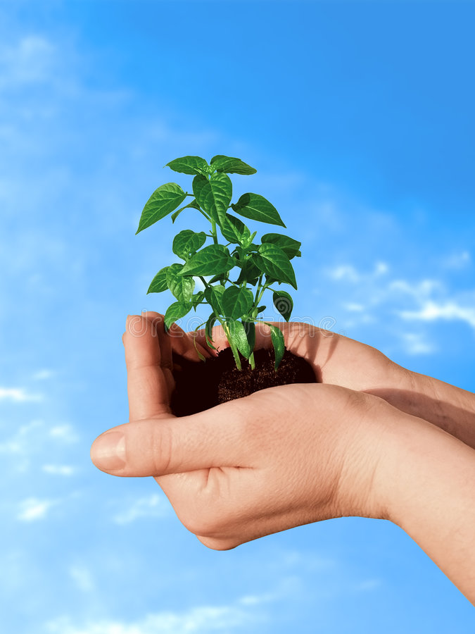 Free Plant In Hand Stock Images - 530764