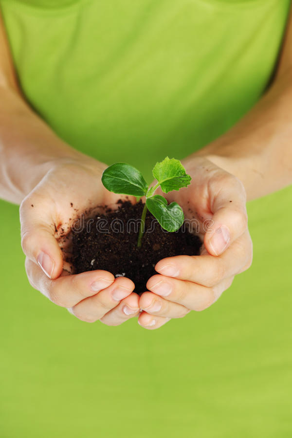 Free Plant In Hands Stock Photos - 19365683