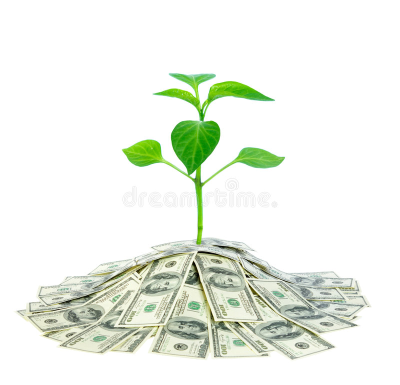 Free Plant In Money Royalty Free Stock Photo - 8603475