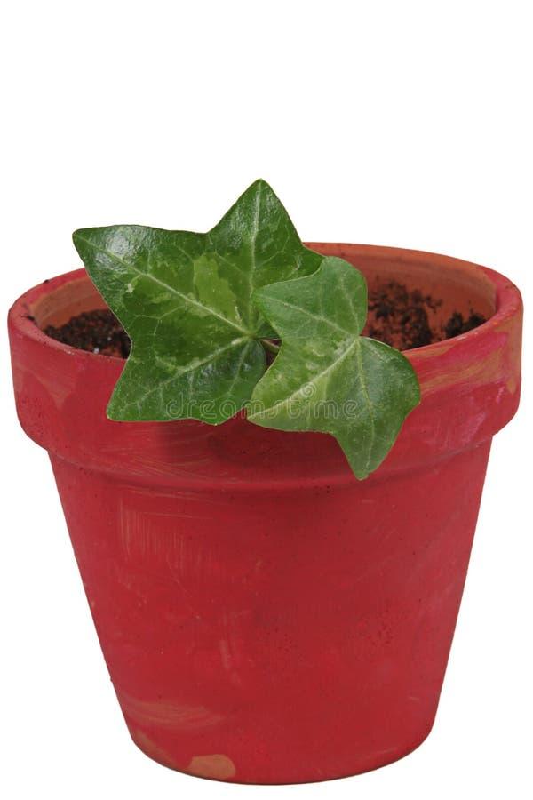 Free Plant In Red Ceramic Pot Stock Photos - 14237313