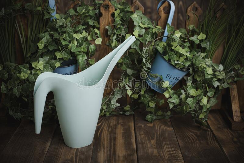 Plant irrigation. Watering can and greenery royalty free stock images