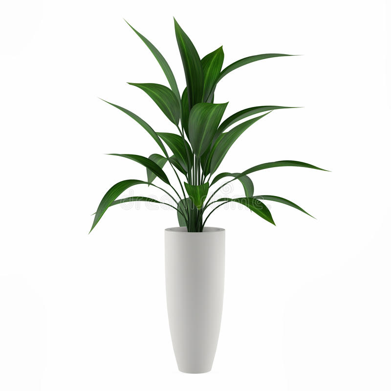 Download Plant Isolated In The Pot Stock Photos - Image: 36408723