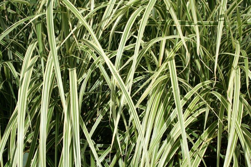 Plant leaf background royalty free stock photos