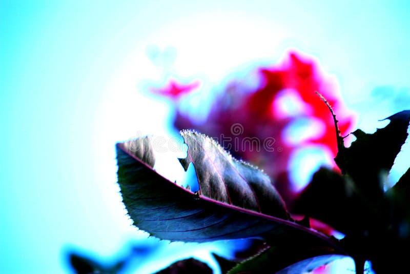 Plant leaf close up stock image