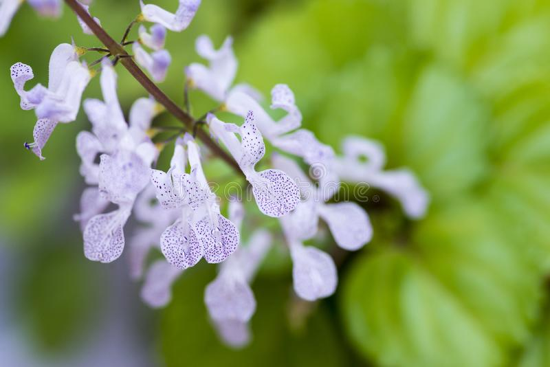 Plant leaf, details seen from close up with flowers with polka dots stock photos
