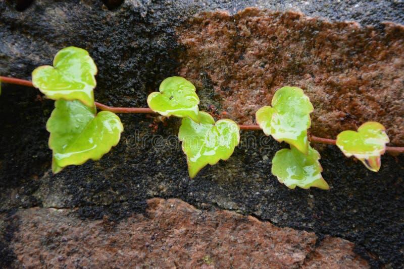 Plant, Leaf, Flora, Leaf Vegetable Free Public Domain Cc0 Image