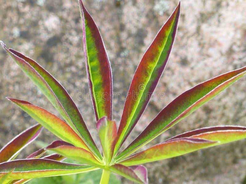 Plant, Leaf, Flora, Plant Stem Free Public Domain Cc0 Image