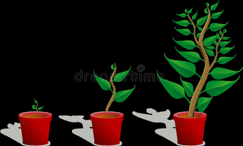Plant, Leaf, Flowerpot, Flora royalty free stock photo