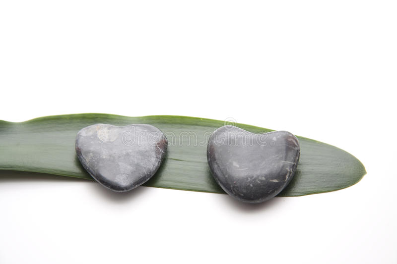 Plant leaf with stone royalty free stock images