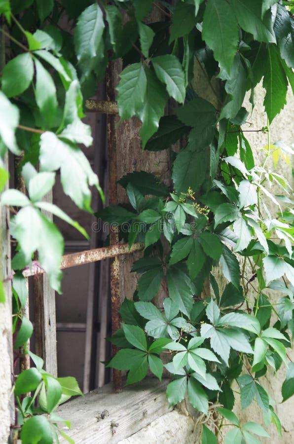 Plant, Leaf, Tree, Ivy Free Public Domain Cc0 Image