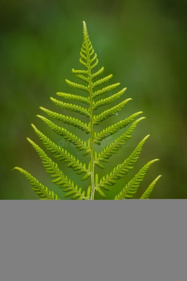 Plant, Leaf, Vegetation, Fern stock photo