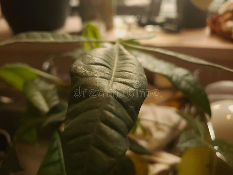 Plant leaf in the warm afternoon stock photo