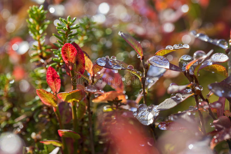 Plant leaves after rain at sunny weather royalty free stock image