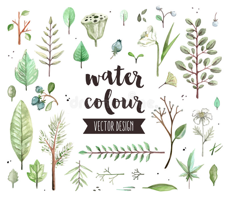 Plant Leaves Watercolor Vector Objects stock illustration