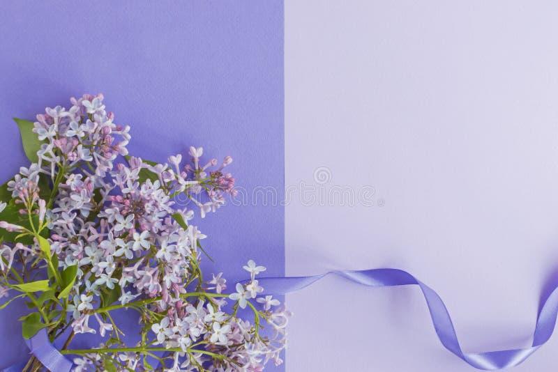 Plant lekmanna- idérikt begrepp med lila filialer royaltyfria foton