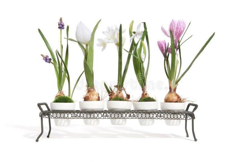 Download Plant Life stock photo. Image of green, design, bulb, stem - 1706978