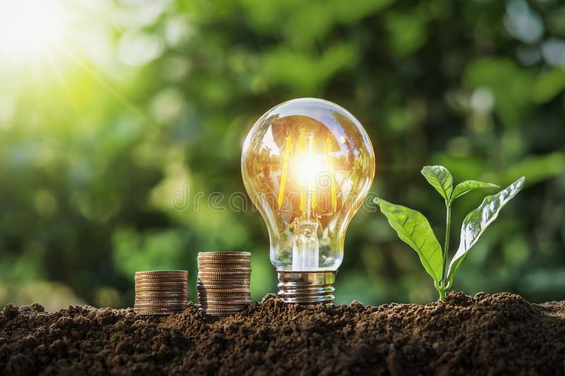 Plant with light bulb and money stack growing on soil with sunshine. concept saving. Background energy white nature finance tree design business bright stock photos
