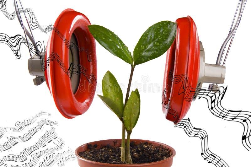 Plant likes music stock image