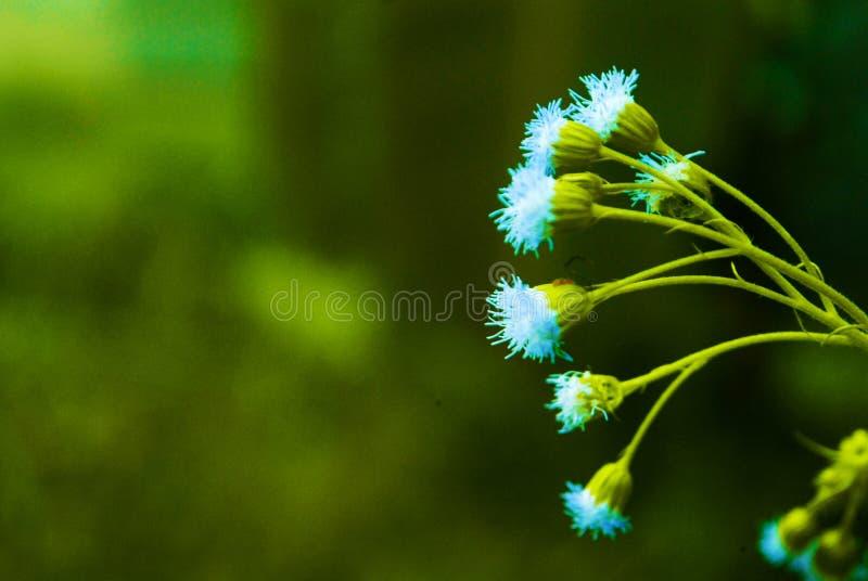 Plant macro stock image