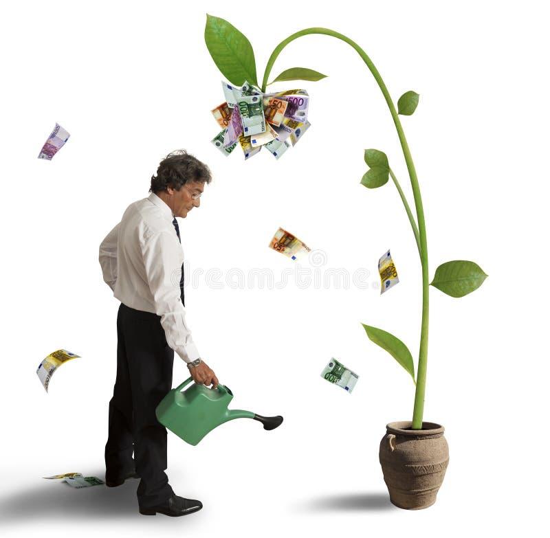 Plant of money stock image