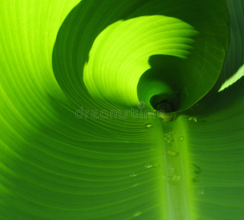 Plant with morning dew stock photos