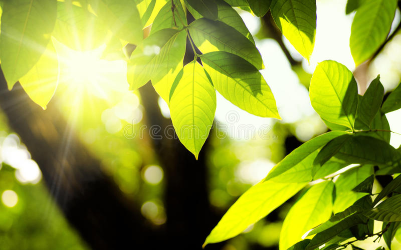 Plant and natural green environment with sunlight. Plant and natural green environment background with sunlight for design royalty free stock photos