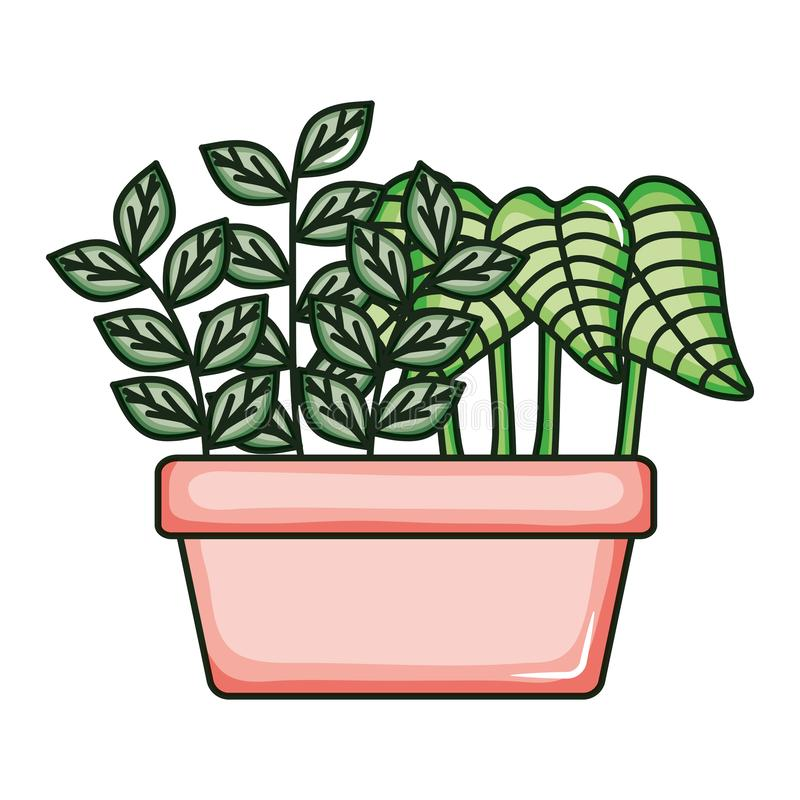 Plant nature in square ceramic pot. Vector illustration design royalty free illustration