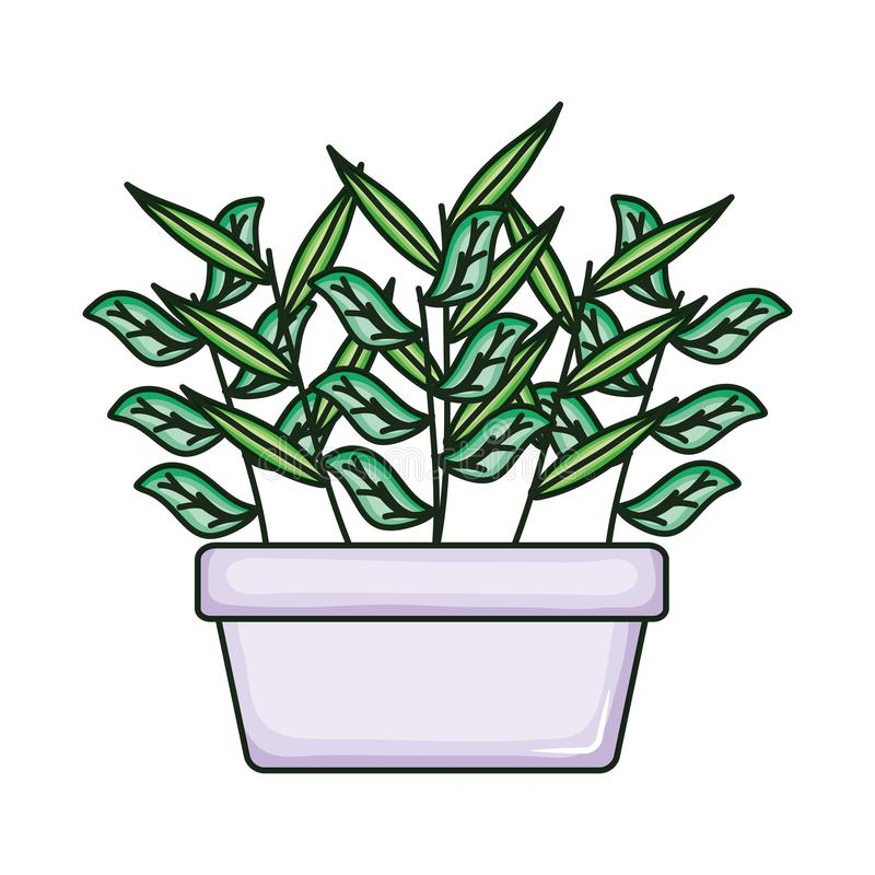 Plant nature in square ceramic pot. Vector illustration design vector illustration