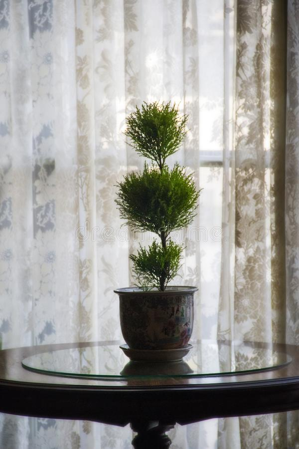 Plant near a window inside the Breakers Mansion in Newport Rhode Island stock image