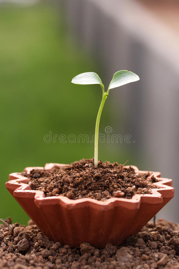 Download Plant-New life stock photo. Image of progress, scale, close - 9481670