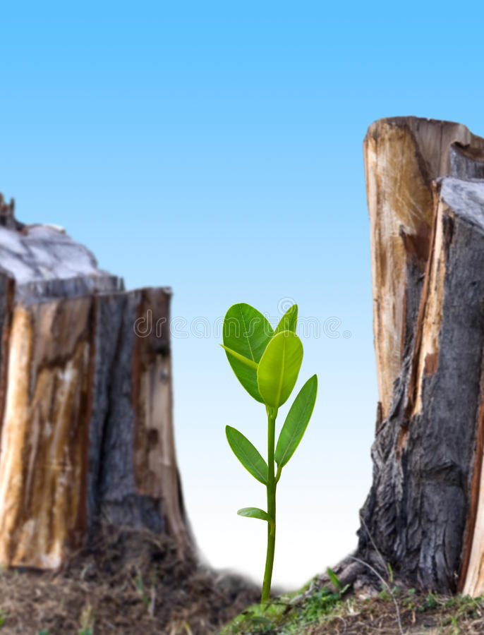 Plant new tree stock images