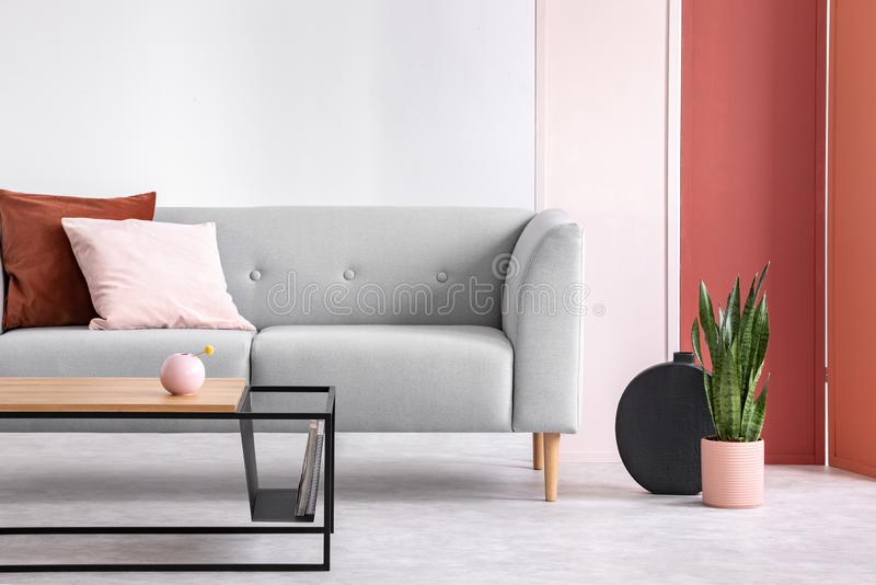 Plant next to grey couch with pink and red pillow with table and screen. Real photo stock photo