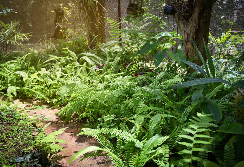 Plant nursery fern royalty free stock images