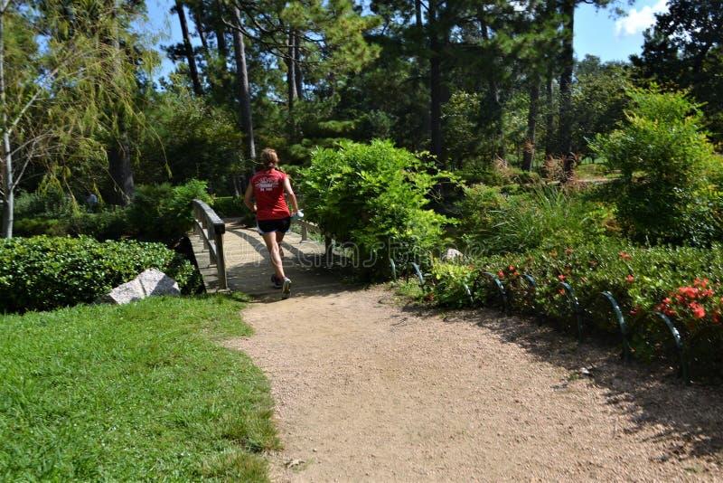 Plant, Path, Garden, Botanical Garden royalty free stock image