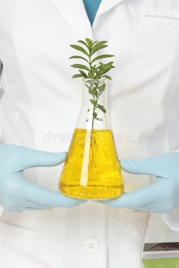 Plant Pathology (phytopatholog (phytopathology) stock image