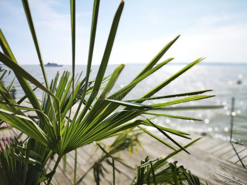 Plant on the pier, Balaton lake, Hungary. royalty free stock images