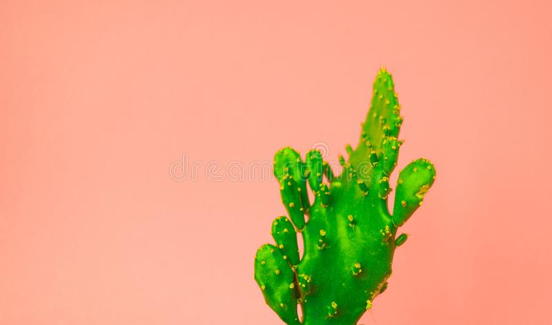 Plant on pink. Tropical Greens minimal art design.Contemporary Art. stock photos