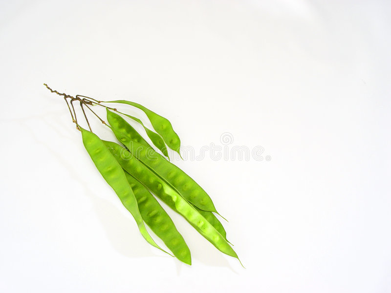 Plant Pods royalty free stock photo