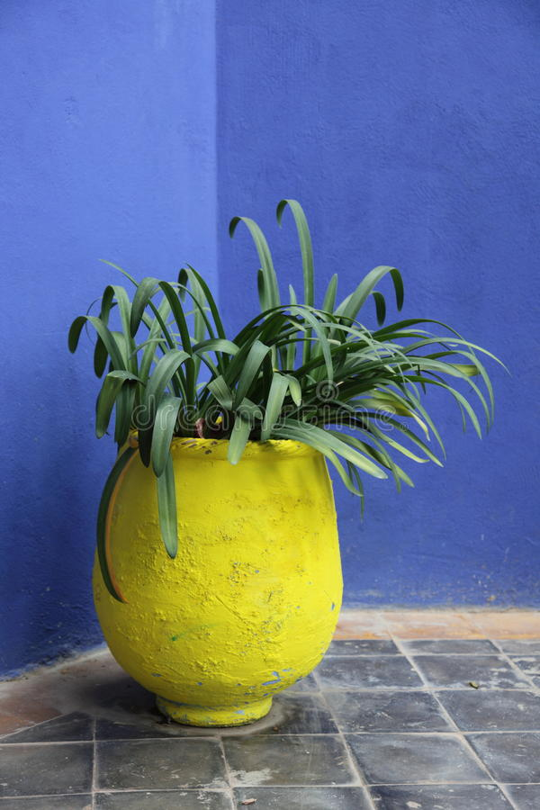 Plant pot royalty free stock photo