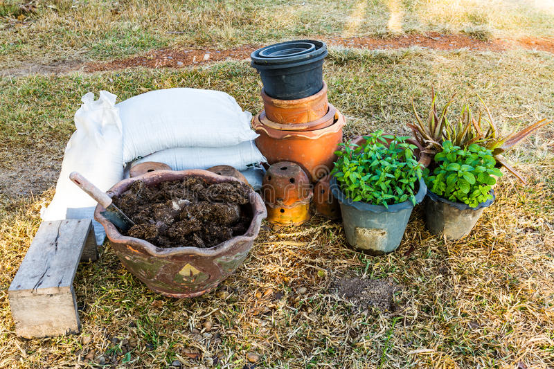 Plant pots with vegetables and herbs and watering can/planting/plant pots / plant jardiniere stock photography