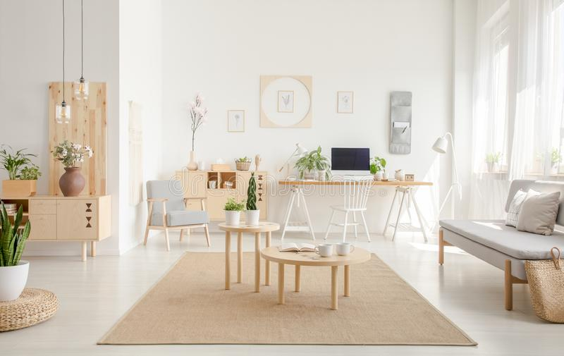 Plant on pouf neat wooden tables on brown carpet in spacious white flat interior with sofa. Real photo stock photo