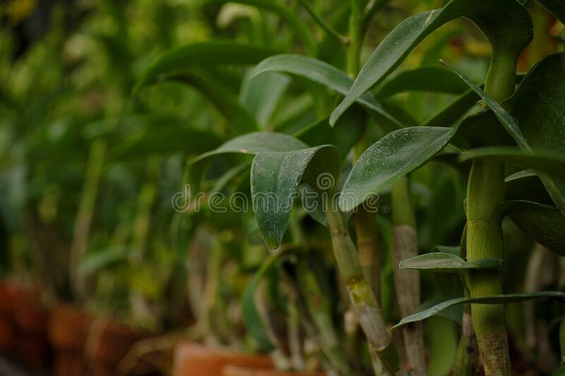 Plant put on garden pot in Quezon City, Philippines. Plant put on garden pot positioned by rows in Quezon City, Philippines stock image