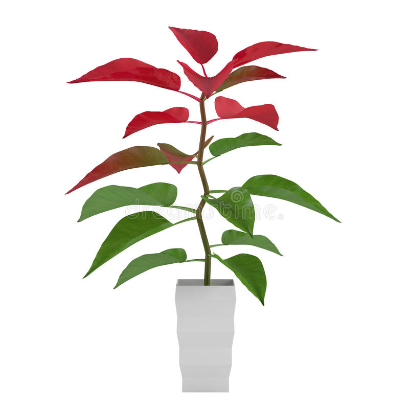 Download Plant With Red And Green Leaves In The Pot Royalty Free Stock Photography - Image: 36408817