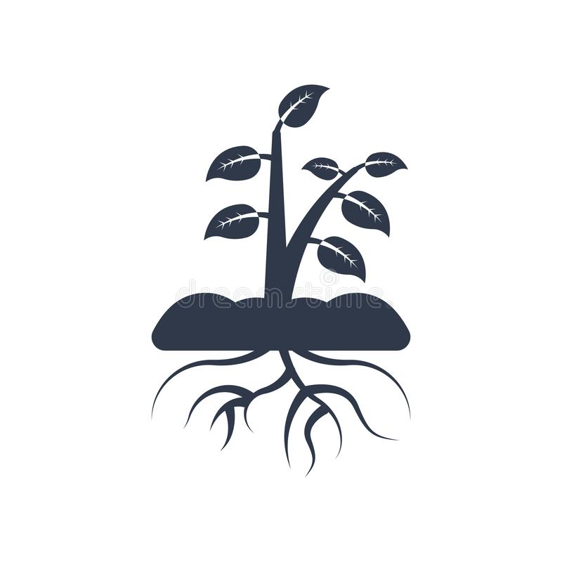 Plant and root icon vector sign and symbol isolated on white background, Plant and root logo concept. Plant and root icon vector isolated on white background for stock illustration