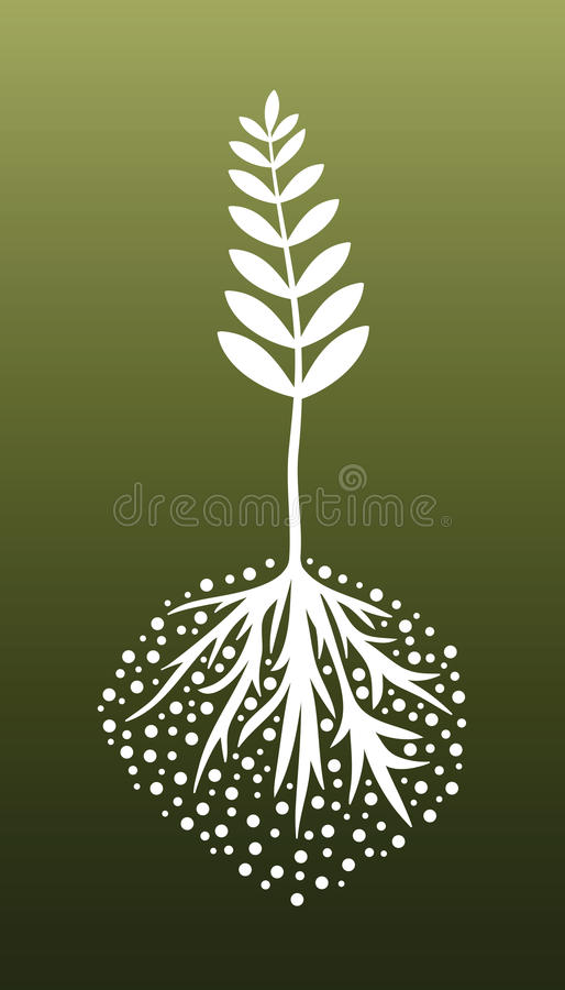 Plant and Roots royalty free illustration