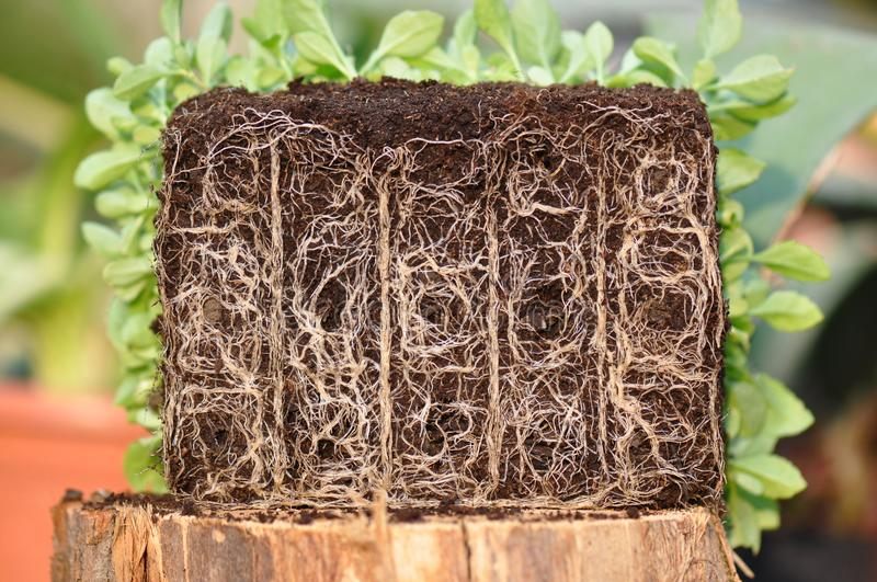 Plant roots stock photos
