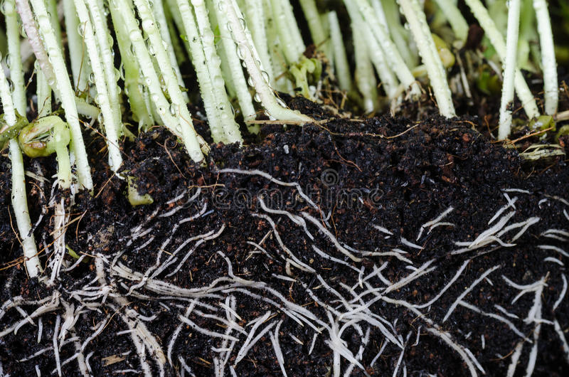 Plant and roots royalty free stock photography