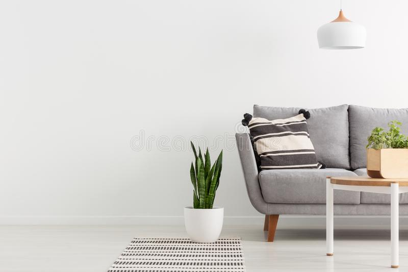 Grey sofa in white living room interior with copy space on empty wall. Real photo. Plant on rug next to grey sofa in white living room interior with copy space stock photos