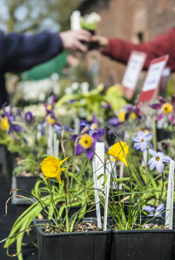 Download Plant Sale Stock Images - Image: 31162994