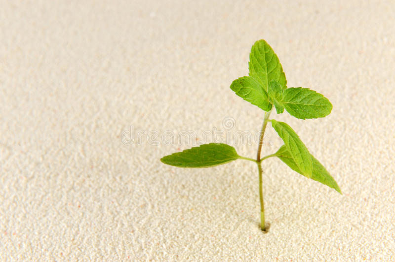 Download Plant On Sands Stock Photography - Image: 25085892